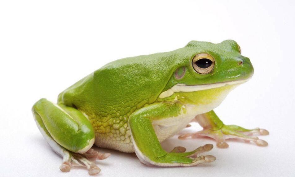 大眼青蛙钩针图解
