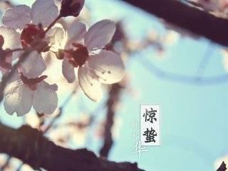 惊蛰|大地惊雷,春暖花开