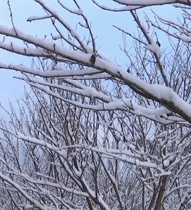 贵州雪景,如此美丽!