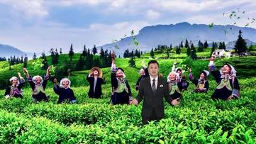 贵州最美的茶园是啥样?