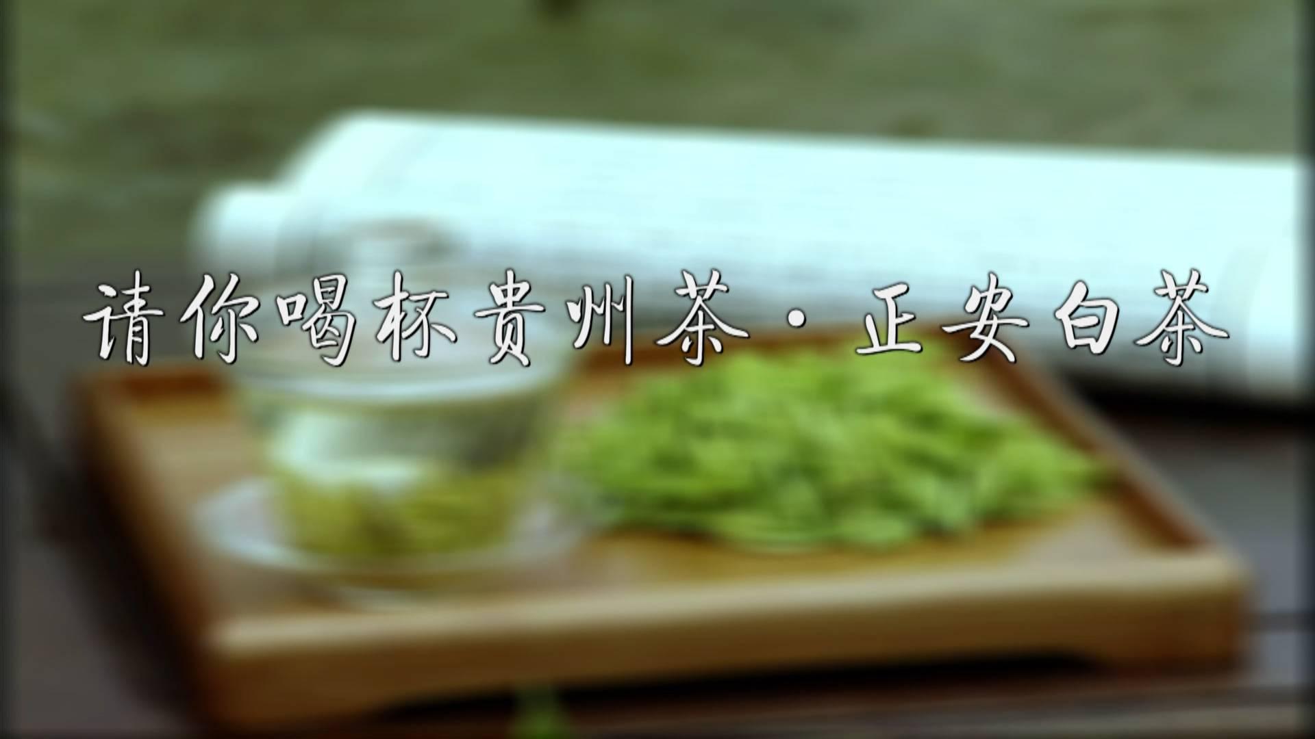 请你喝杯贵州茶·正安白茶