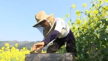 贵州农民的日常:追着鲜花酿蜂蜜,玛瑙樱桃满山香