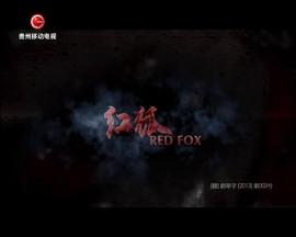 红狐006