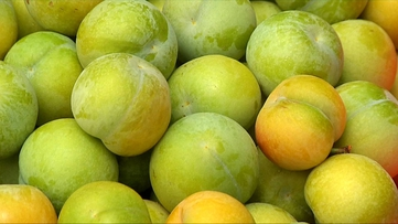 一斤最高可以卖到180!贵州这个名副其实的精品水果是怎么出山的?