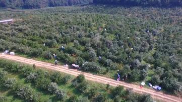 """农村产业革命""""给力"""" 这波旺季贵州果农赶上了"""