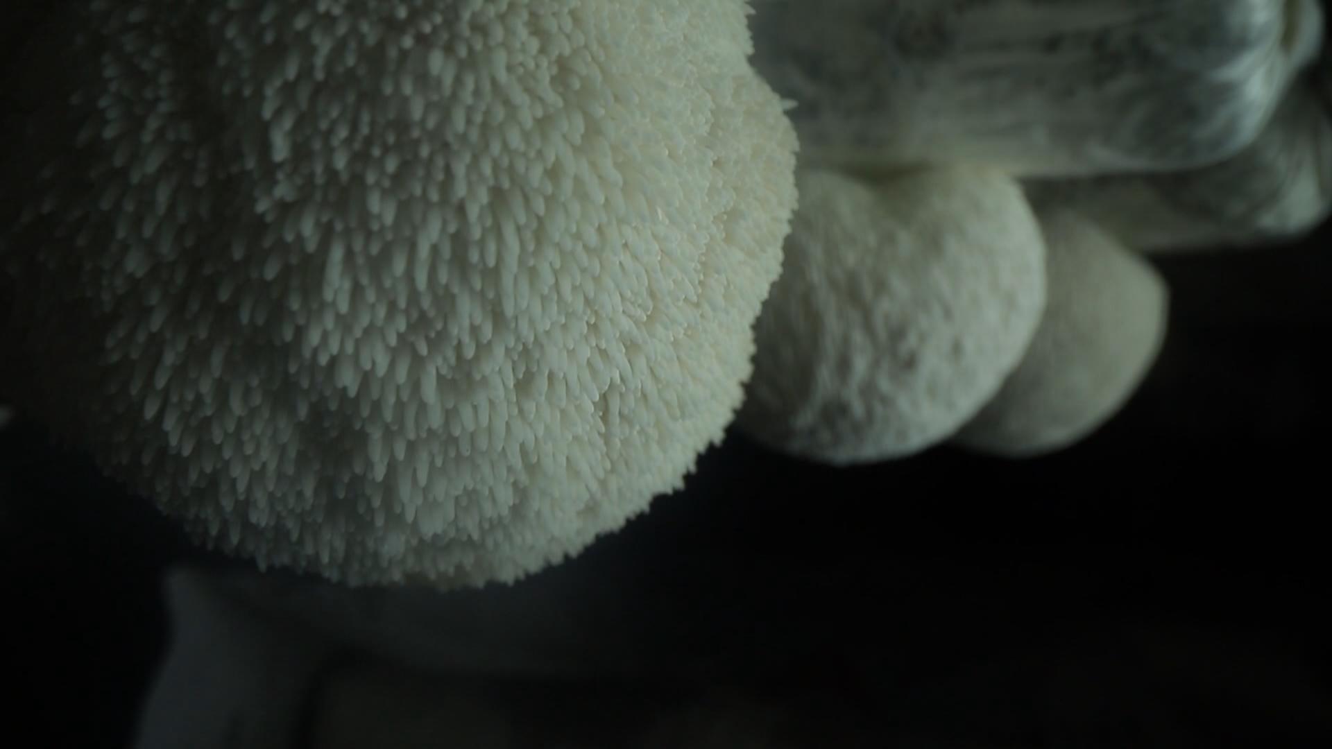 培育珍稀品种 提升食用菌产业效益