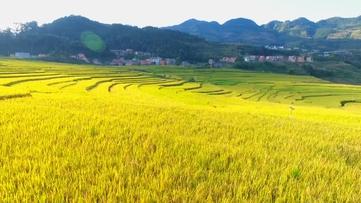 贵州新闻联播丨阳光洒过的梯田,十一长假绝对不可错过!