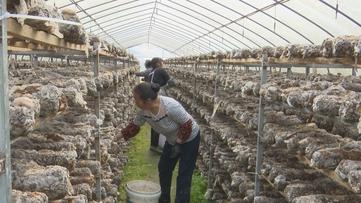贵州新闻联播丨贵州45家农民合作社入选国家示范社 助力乡村振兴高质量发展