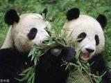 台湾省人大代表建议?#21512;?#39640;雄市赠送大熊猫