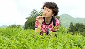 联播女主播带你去品贵州茶