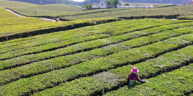筑城百景图丨千亩茶山、百顷果园,冬日的这里竟还藏着如此美景!
