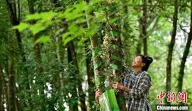 贵州省国家储备林项目完成建设面积323.7万亩